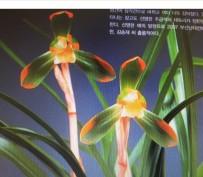 복색화(황위)14-16촉꽃 3경