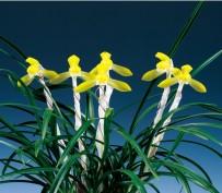 황화(황연)5촉 꽃 1경