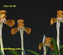 홍화(대홍포)8촉 꽃 4경