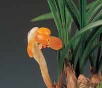 주금화(여일) 6촉 꽃 2경