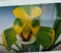 복륜화(청양)11촉 꽃 3경