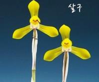 황화(살구)6촉꽃1경