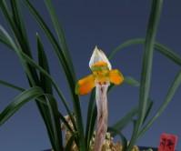 중투복색(지존)3촉 꽃1경