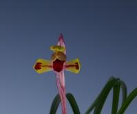 수채색설(세자비)8촉 꽃1경