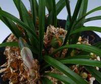 복색화(단정매 )6촉꽃2경