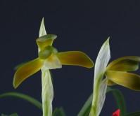 홍화소심(무명)4촉 꽃2경