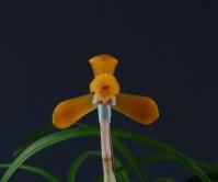주금화(삼다도 )12촉 꽃2경