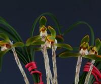복색화(꽃성)9촉 꽃5경