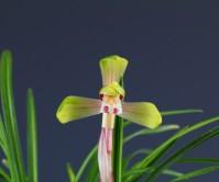 산반중투화(첯꽃 )20촉 꽃1경