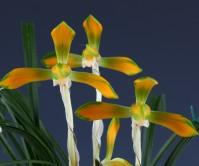 중투복색(운선)10촉 꽃4경