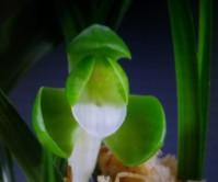 원판소심(공)5촉 꽃2경