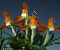 주금소심(동광)5촉 꽃1경