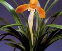 주금화(주금보)8촉 꽃2경