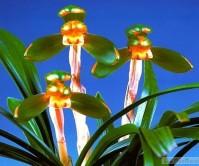 주홍복색화(단정매)10촉 꽃2경