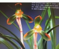 복색화(황희)17촉 꽃2경