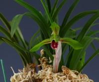 색설화(무명)8촉 꽃2경