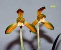 중투복색(태극문)7촉 꽃1경