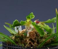 기화(갓바위)5촉 꽃2경