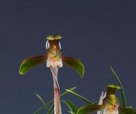 복륜화(무명)8촉 꽃2경