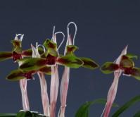 송화2촉 꽃1경