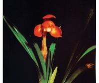 만물4촉 꽃1경