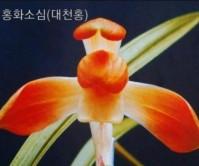 대천홍(세종)