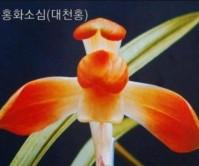 대천홍(구세종)