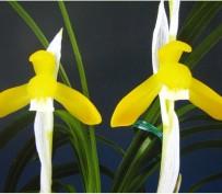 황금소-건강한태양초
