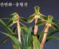 송월산-종자하세요
