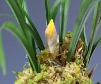황화(무명) 4촉에 꽃 1경