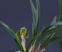 두화(무명)4촉 꽃1경