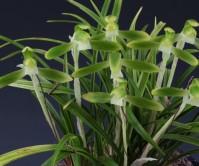 산반소심(동방소 ) 꽃 8경