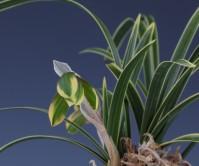 목륜화(무명)꽃 2경