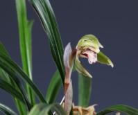 산반기화(무명) 4촉에 꽃 1경